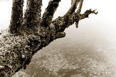 dead tree (mav_at) Tags: camera winter lake cold reflection tree water dark photography austria see photo sterreich nikon wasser ast branch foto fotografie stones d70s steine ufer toned ste kalt baum kamera steiermark salzkammergut tnung maverickat mavat