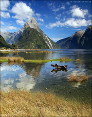 mitre peak, milford sound (Daniel Murray (southnz)) Tags: park sea newzealand summer mountain reflection water grass landscape coast scenery peak national nz sound southisland milford mitre glacial fiordland southnz