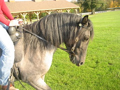 My Spanish Horse