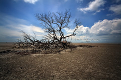 Dead Tree (vedd) Tags: sea tree beach canon eos decay malaysia dri nd400 banting 5xp nonhdr 400d kelanang pantaikelanang vedd kelanangbeach