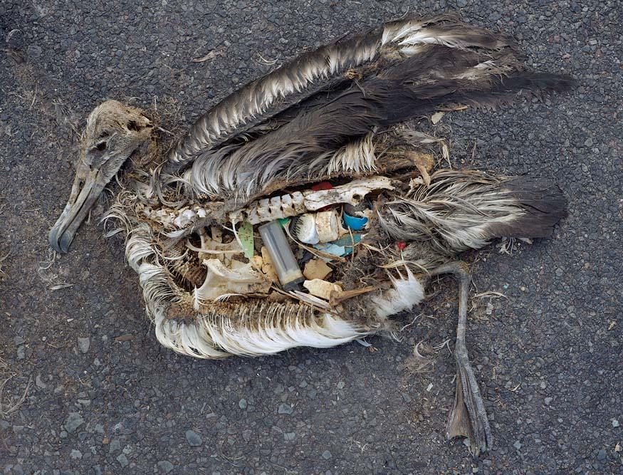 4034437686 0262fa2368 o Las consecuencias de tirar basura en las playas