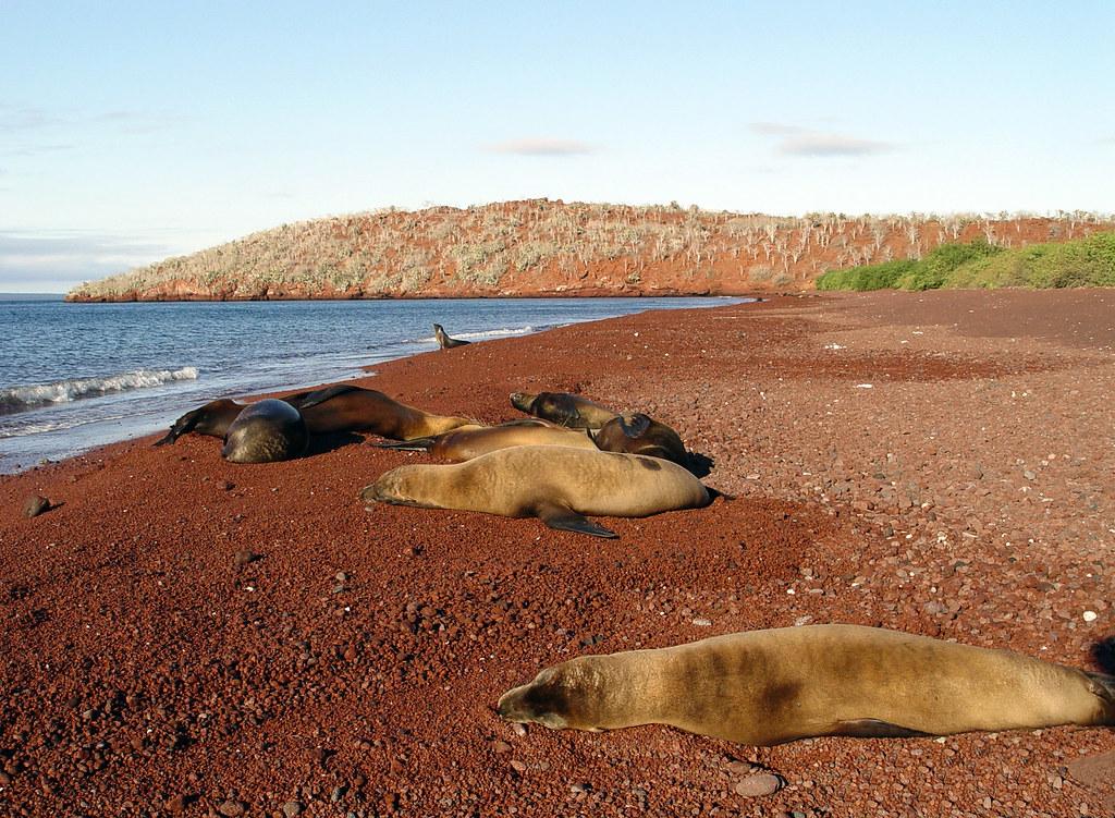 DSC00994 Galapagos seals