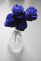 [ 26 / 365 ] (Muneerah Ibrahim) Tags: november flowers blue roses flower love rose canon project eos days 365 pure 2009 40d noedite