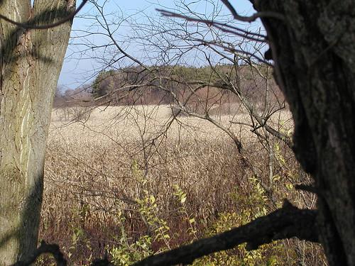 treestand11-20-09seaofcorn