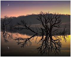 Moon Over Pond (glness) Tags: sunset moon reflection tree golden pond sundown crescent highwater goldenhour crescentmoon thesuperbmasterpiece canon5dmarkii gregness canonef24105mmf40lis specialshotswelltaken