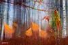 """Our linen heads!"" (natans) Tags: plants fairytale forest stage story marsh birch oulu magical hdr visualart natans labradortea diamondclassphotographer flickrdiamond awardtree creattività"
