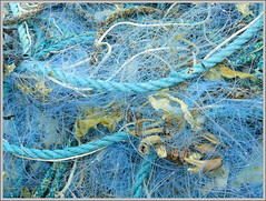 Le blues du crabe (Marcello_14) Tags: bleu crabe filets cordage