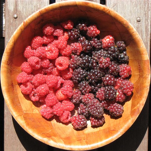 Berry Harvest