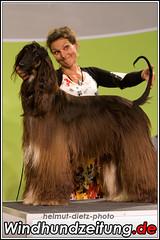 FCI Jahrhundertsieger Ausstellung: BIS: Afghanischer Windhund