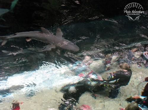 Above the Shark Tank