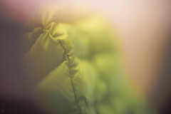Abstract III Option I °052/365 (donlunzo16) Tags: nikon df color lightroom raw nef preset vsco film vignette pack 3x nd filter city town nikkor ais manual lens freelensing abstract bokeh soft colorful 50mm f112 365the2017edition 3652017 day52365 21feb17 jacket yellow