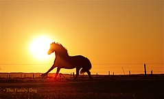Toward the Within (The Family Dog) Tags: horses horse color silhouette cheval caballos cavalos pferde equine equines cheveaux tropilla tropsilla