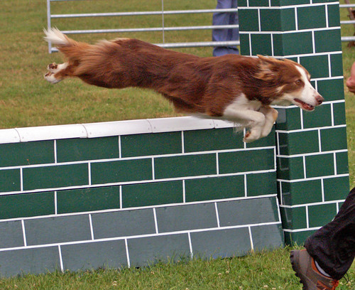 Dog Agility Class on Flickr