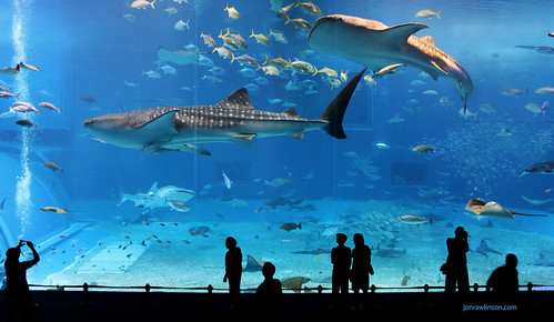 Kuroshio Sea - 2nd largest aquarium tank in the world. Photo by jonrawlinson on Flickr