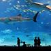 Kuroshio Sea - 2nd largest aquarium tank in the world - WATCH VIDEO ON VIMEO par jonrawlinson