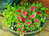 Flowerless (boisebluebird) Tags: flowers summer plants flower beauty garden design flora gardening boise patio fiore luxury gardendesign michaeltoolson boisebluebirdcom httpwwwboisebluebirdcom boiselandscaping boisegardener