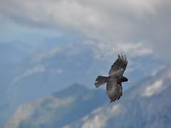 ssc_0372 (Jaume Grau) Tags: slovenija eslovenia
