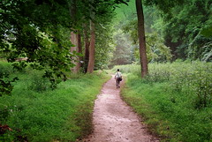 A MAN WALKS ON A PATH IN AN OPENING IN THICK FOREST (Citizen of Two Worlds) Tags: trees green forest river virginia path lovers jungle potomac lonely riverbend thepath thickgrowth