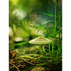 Pixie Hollow (isayx3) Tags: world green mushroom colors forest 50mm dof post bell bokeh olympus explore fungus 365 process friday magical frontpage smurfs pp tinker e510 plainjoe pixiehollow machelspence isayx3