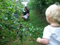 berryy pickin! (kathill) Tags: cake baking lemon berries farmers market sweet chocolate bowl blueberry homemade cupcake vanilla salem farmer organic bake batter cupcakery halfcaked
