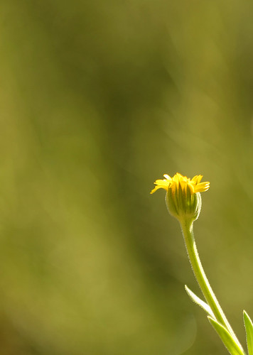 not afraid to be yellow in a sea of green (imagoism thursday 69)
