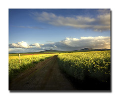 Our Secret! (Jo-Ann Stokes) Tags: road blue yellow clouds landscapes hills durbanville canolafields