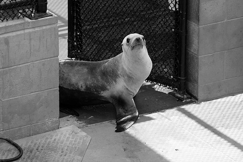 Hello sea lion