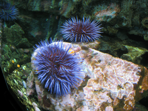 Pictures from the Seattle Aquarium