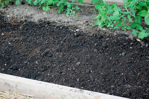 radish seed mats3