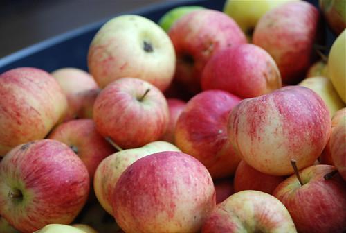 koduaia õunad