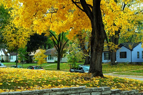 Yellow Tree Leaves