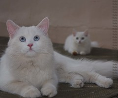 Sam with his little friend .. (Ruba ,,) Tags: cat sam ó قطه قطو قطوتي بسه سام