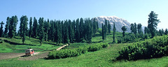 Upper-Lalazar-Meadow (Kaiser-Khan) Tags: trees pakistan mountain green jeep meadows upper valley kaghan slope lalazar