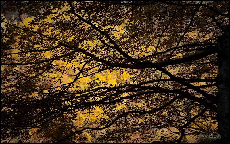 ordesa otoño 09