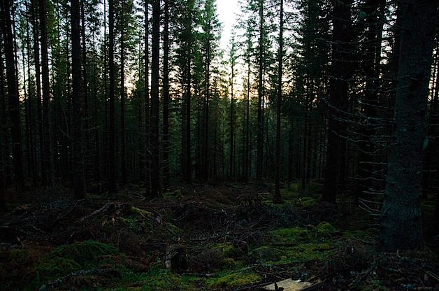 skogen.jpg