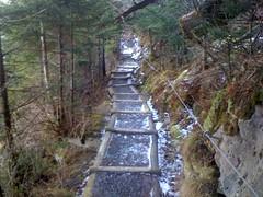 Trillium Gap Trail 1