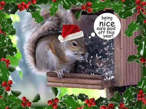 Calamity Kim: Earl the Squirrel says Merry Christmas!