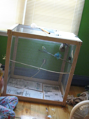 Nature Boy made a large cage for his birds for their holiday present