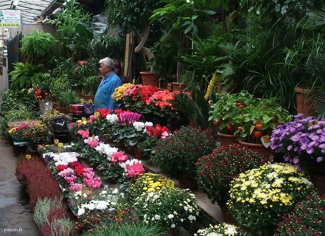 Beaucoup de fleurs, rares ou pas, insolites ou communes
