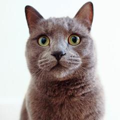 Where's my tea? (Mr 76) Tags: uk cats pen cat olympus olympuspen zuiko lightroom ep1 theuninvited olympuspenep1 mzuikodigitaled17mmf28 thegreycats