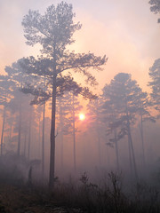 "Where there's smoke, there's fire"" (""OnlyByGrace"") Tags: forest mississippi fire forestry smoke pulpfiction mississippistateuniversity platinumheartaward oktibehhacountyrefuge esenciadelanaturaleza"