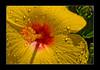 2009 06 24_Spania2009_1207 (Nbjorlo) Tags: flowers summer macro spain torrevieja ashowoff