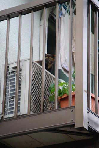 Today's Cat@20090725