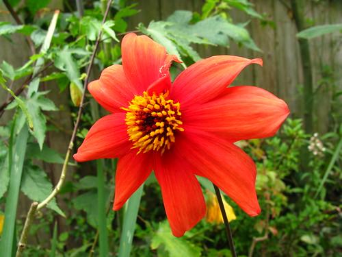 2009-08-01 garden