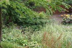 DSC08961 (Glasgowfoodie) Tags: birnam mrjeremyfisher