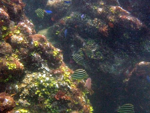 ヒリゾ浜2009