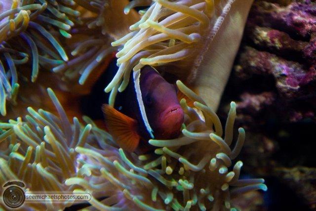 5 San Francisco Aquarium 72009 © Michael Klayman-001