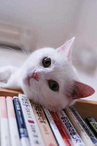 Favorite Place - Bookshelf