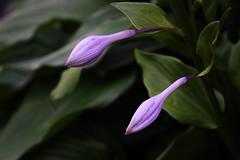 Nature_03