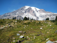 Mount Rainier! (Jehane*) Tags: seattle usa mountain snow washington mountrainier theunforgettablepictures concordians theperfectphotographer spiritofphotography artofimages jehanesphotography